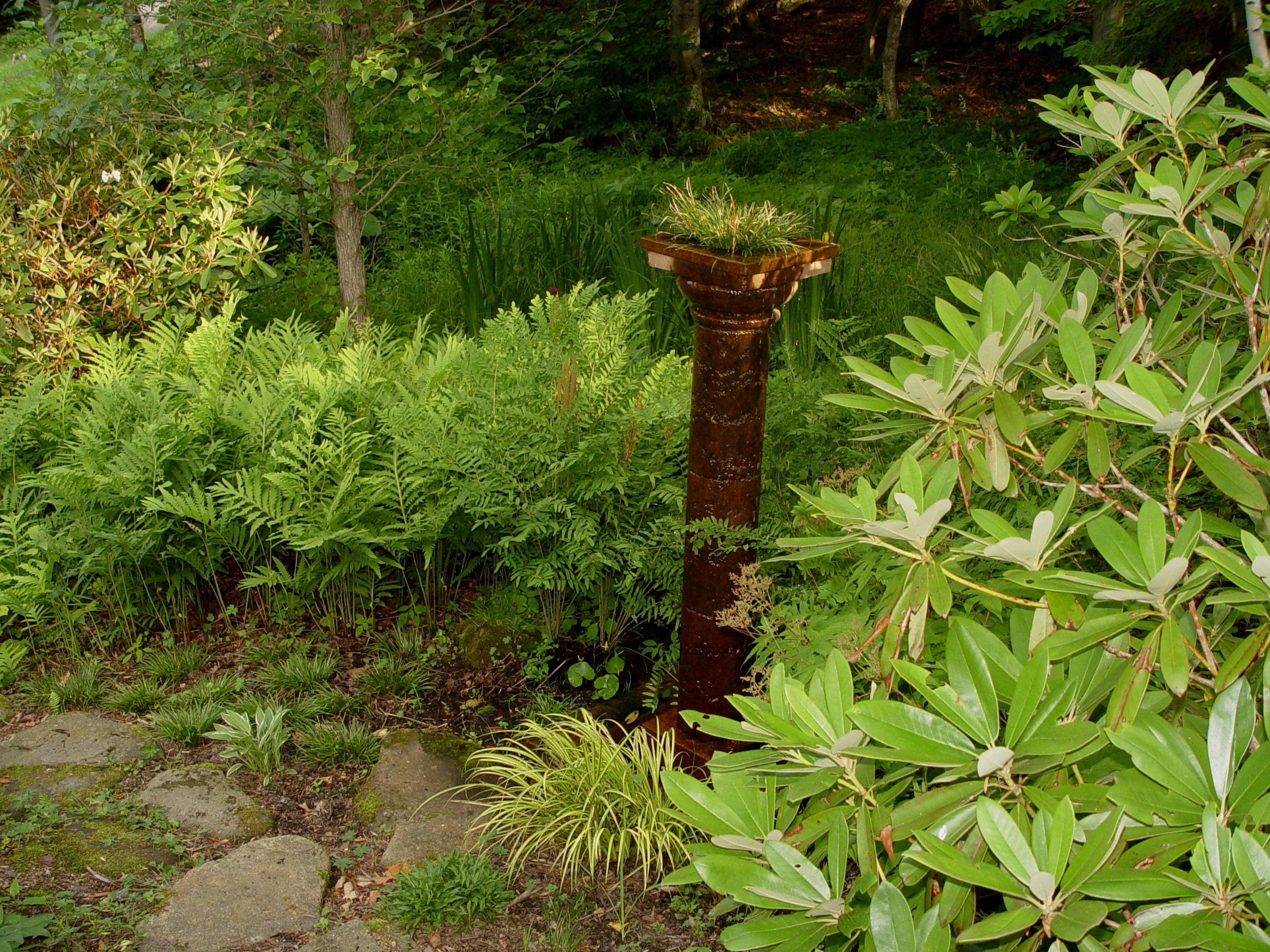 Osmunda regalis 'Royal Fern'