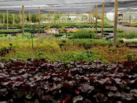 About Our Nursery
